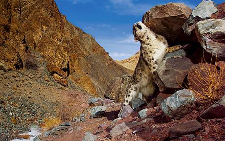 Snow Leopard desktop picture